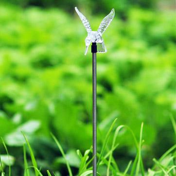 Luce solare del colibrì solare