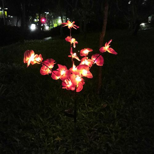 Sluneční Vedený Orchidej Strom Světlo