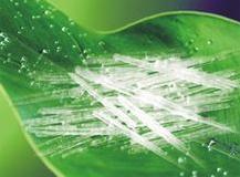 Effektiviteten og rollen af naturlige mentholkrystaller
