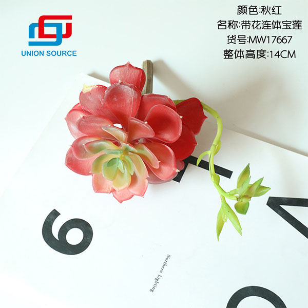 High Quality Lotus Flower With Conjoined Body Meaty Plants For Home Decoration