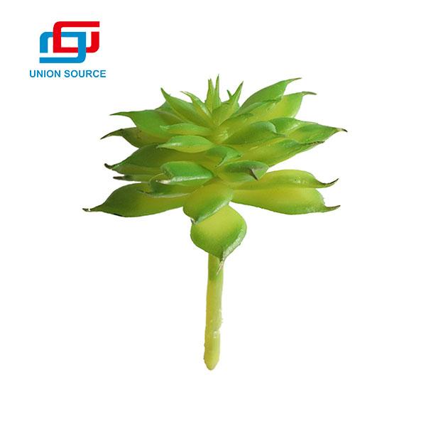 Plantas carnosas de Lotus de la tierra suculenta del precio bajo para el uso de la decoración