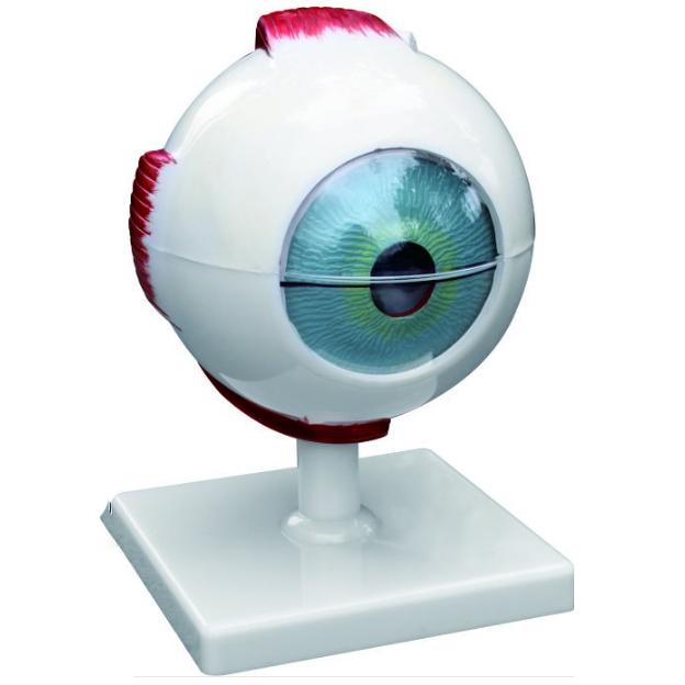 5 Times Eye Model