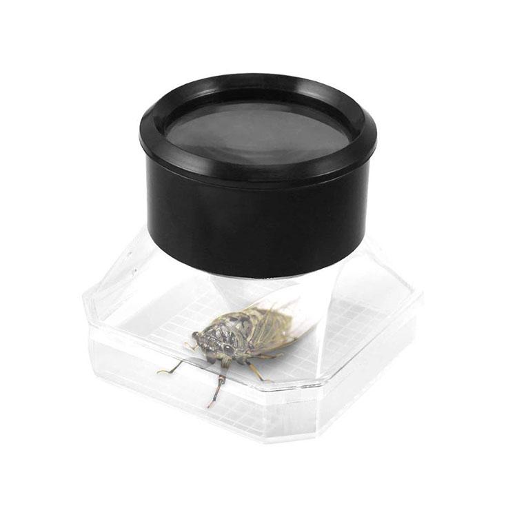 Bug Viewer Box