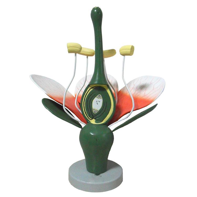 Dicto Flower Model