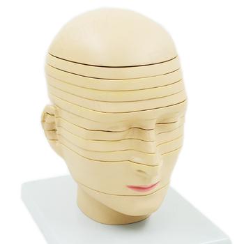 Anatomický model hlavy a mozku