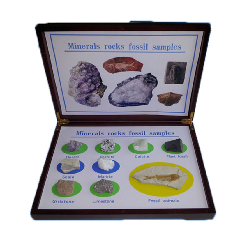 Minerals Rocks Fossil Samples Specimen