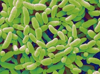 Probiotic Powder For Women To Regulate Estrogen