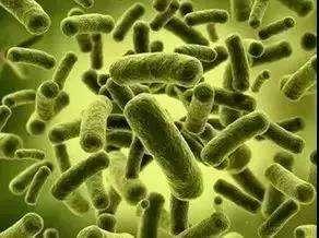 Probiotics For Sleep Improvement In Adults