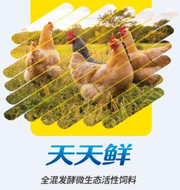 Poultry egg-laying probiotic feed additive