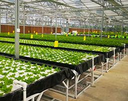 L'importance de la lumière et de l'humidité pour la plantation en serre.