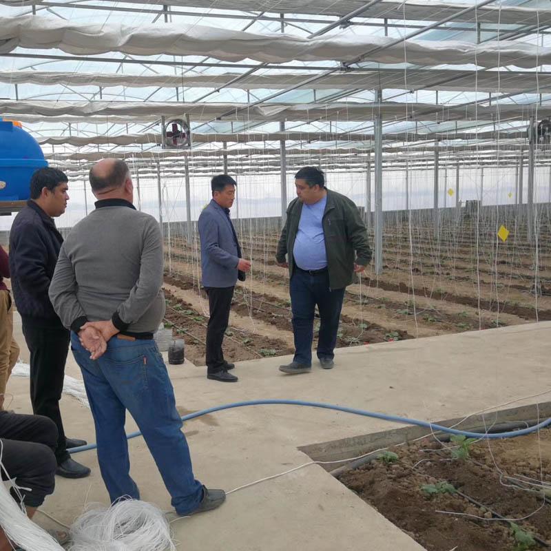 new multi span film greenhouse in UZ