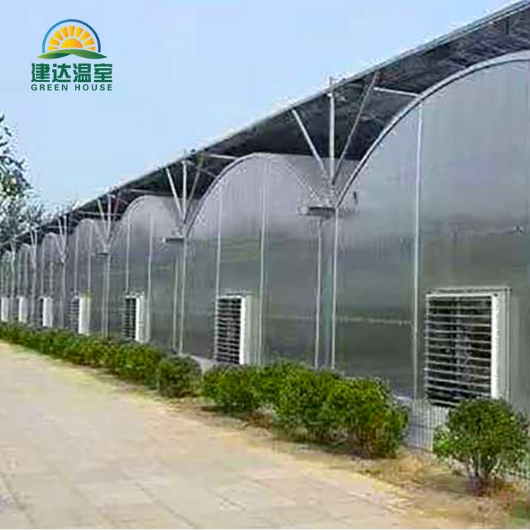 Zemědělský polykarbonátový skleník pro rajče