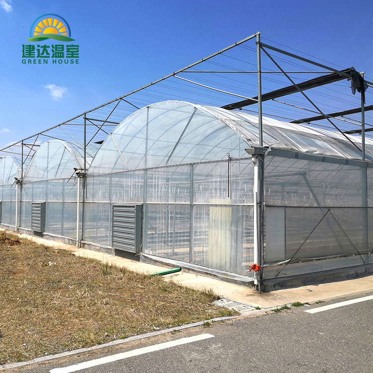 Agriculture à effet de serre de tomates de Chine