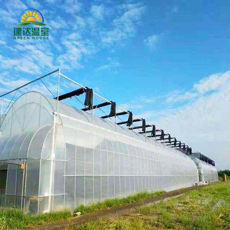 Double Layer Multi Span Film Greenhouse