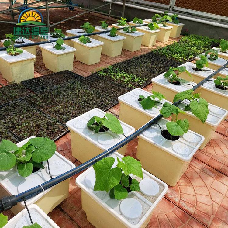 Culture hydroponique de substrat de seau de conduit pour la tomate, légume de concombre