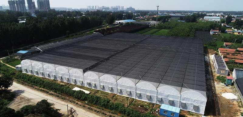 china greenhouse