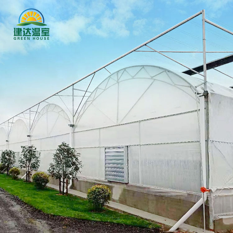 Single Layer Arch Type Multi Span Film Greenhouse