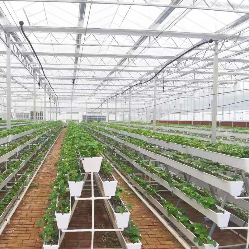strawberry green house